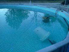 Fixing Brown Rusty Water Excess Iron In Swimming Pool Water P 1